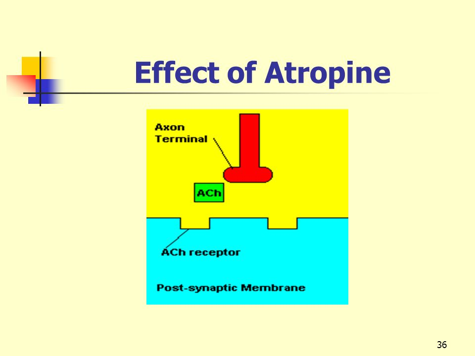 Effect of Atropine
