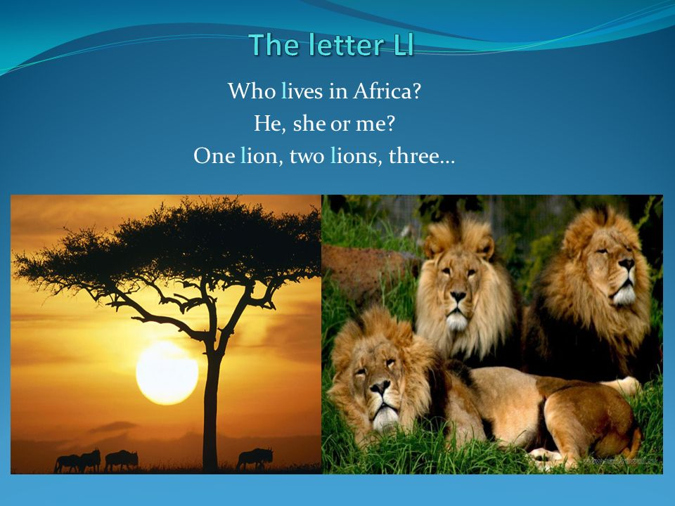Who lives in Africa He, she or me One lion, two lions, three…