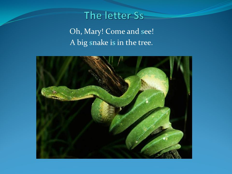Oh, Mary! Come and see! A big snake is in the tree.