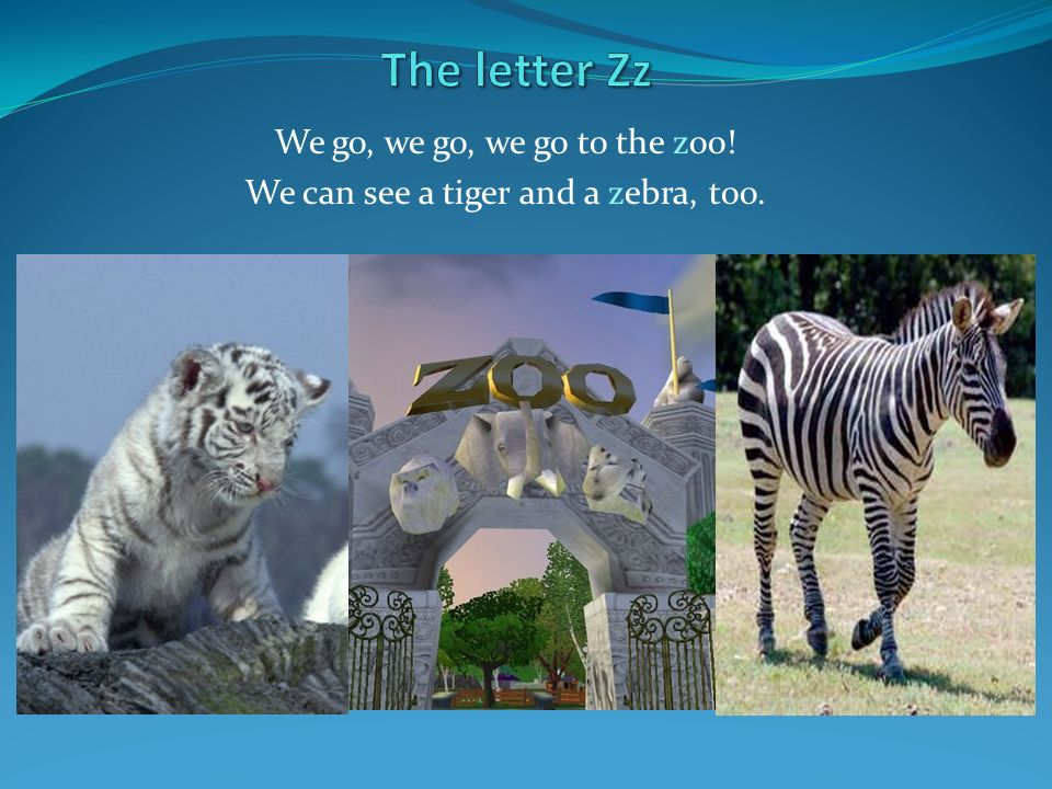 We go, we go, we go to the zoo! We can see a tiger and a zebra, too.