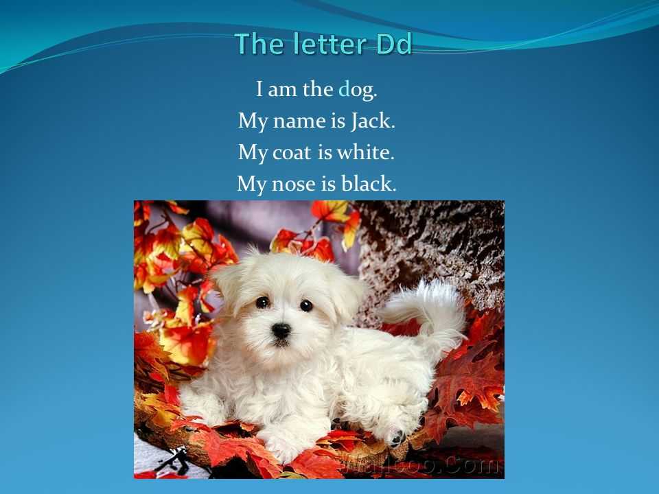I am the dog. My name is Jack. My coat is white. My nose is black.