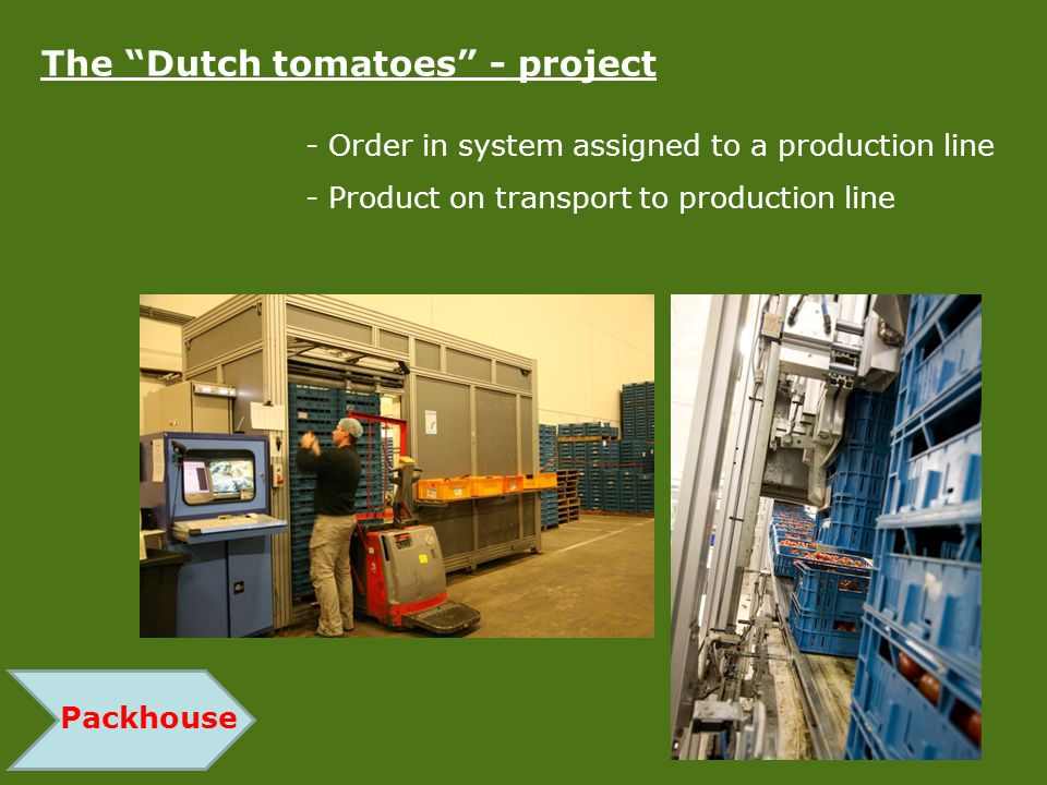 The Dutch tomatoes - project