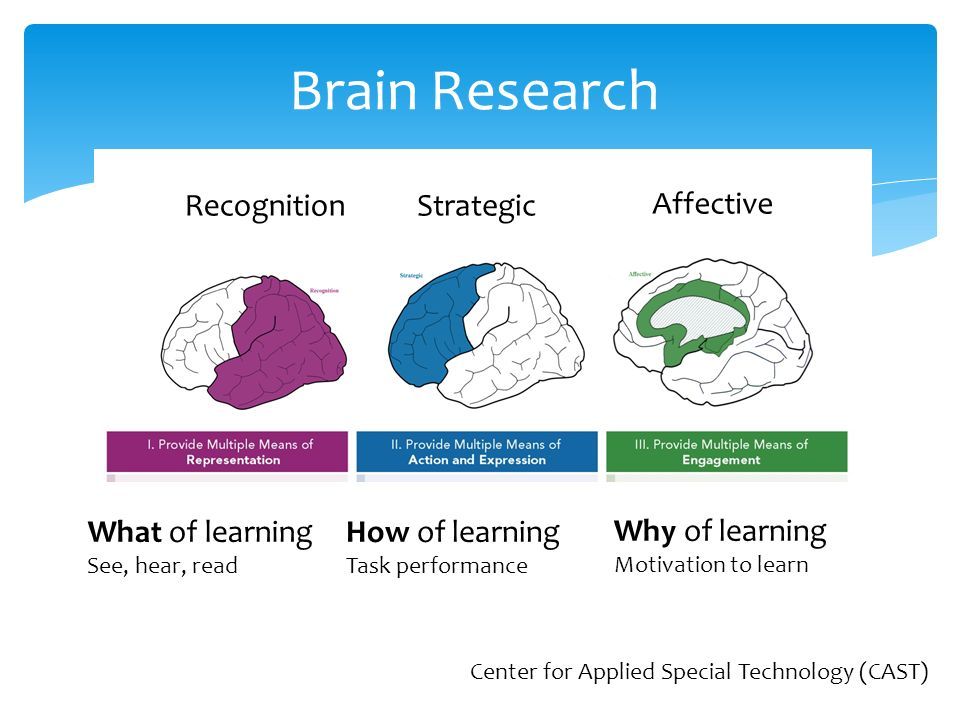 Brain Research Classroom Design : Universal design for learning ppt video online download