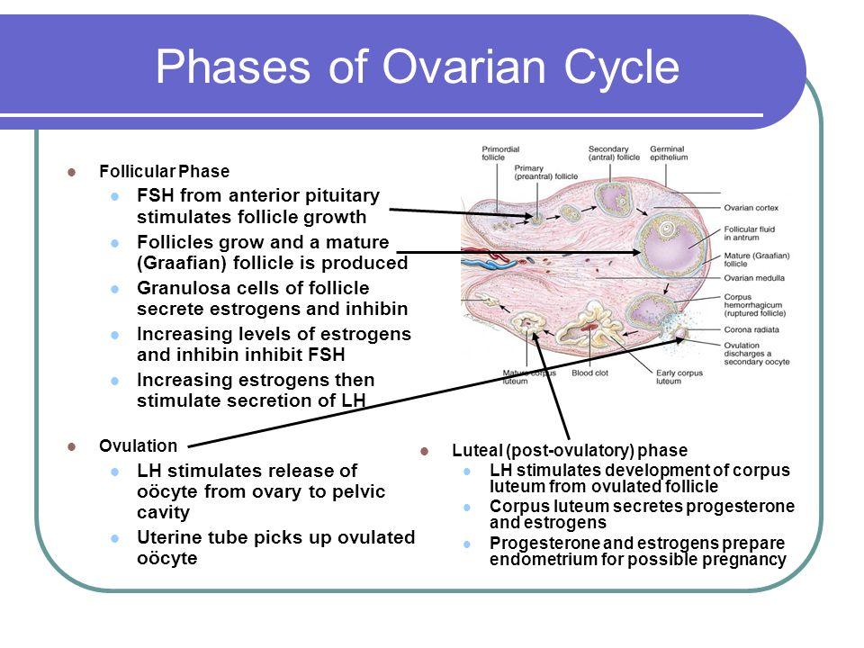 download Developmental Biology of Peripheral Lymphoid Organs