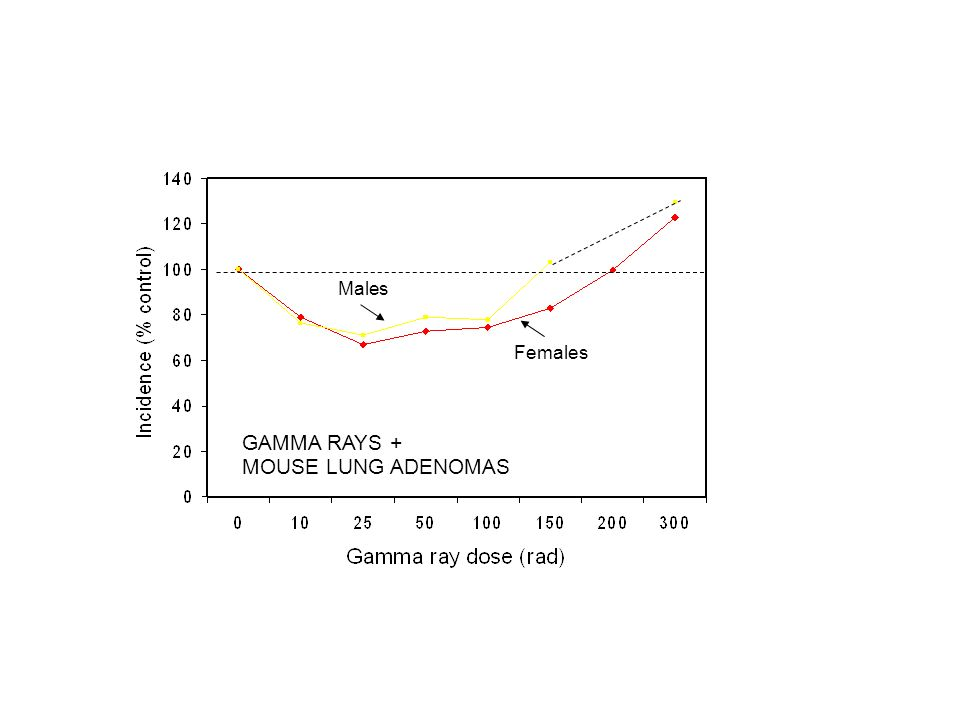 Males Females GAMMA RAYS + MOUSE LUNG ADENOMAS
