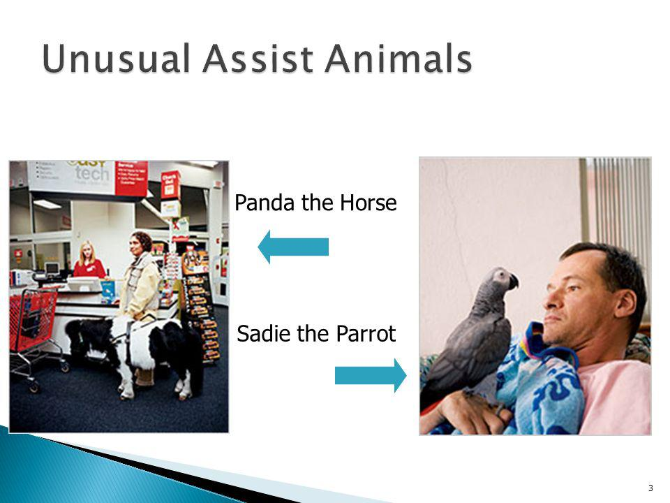 Unusual Assist Animals