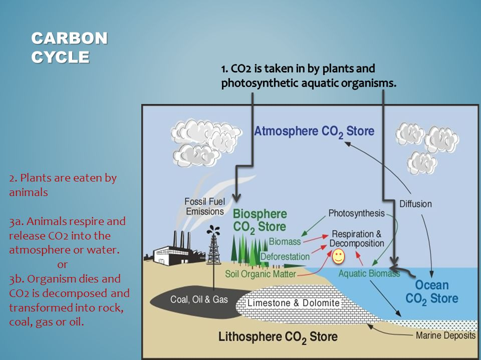 Biochemical cycles earth cycles living ppt download 3 carbon ccuart Image collections