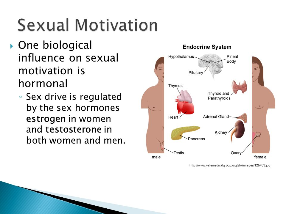 Sexual Motivation One biological influence on sexual motivation is hormonal.