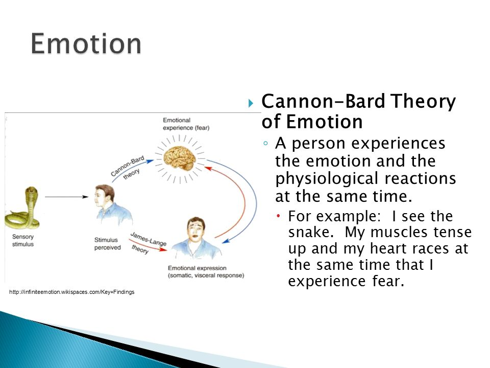 advantages of cannon bard theory On the other hand, according to the cannon-bard theory, proposed first by cannon and later extended by bard, the stimulus leads to both the arousal and the emotion the sound of a gun shot, for example, leads both to the physiological responses like rapid heart rate and trembling and to the subjective experience of fear.