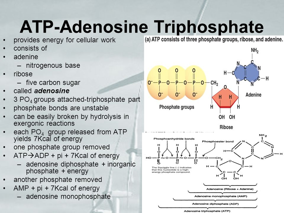 ATP-Adenosine Triphosphate