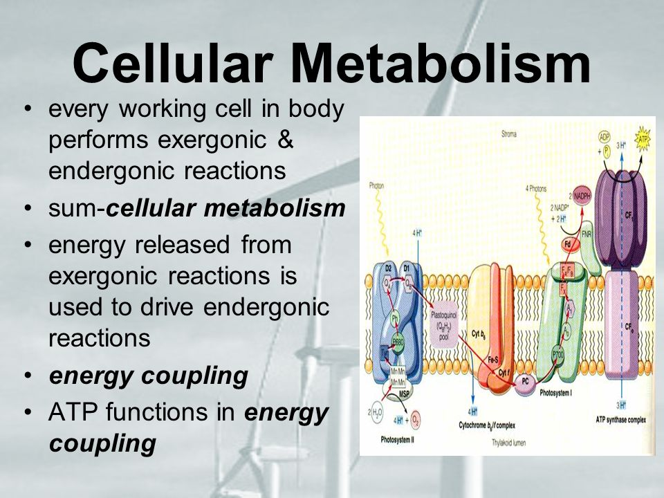 Cellular Metabolism every working cell in body performs exergonic & endergonic reactions. sum-cellular metabolism.
