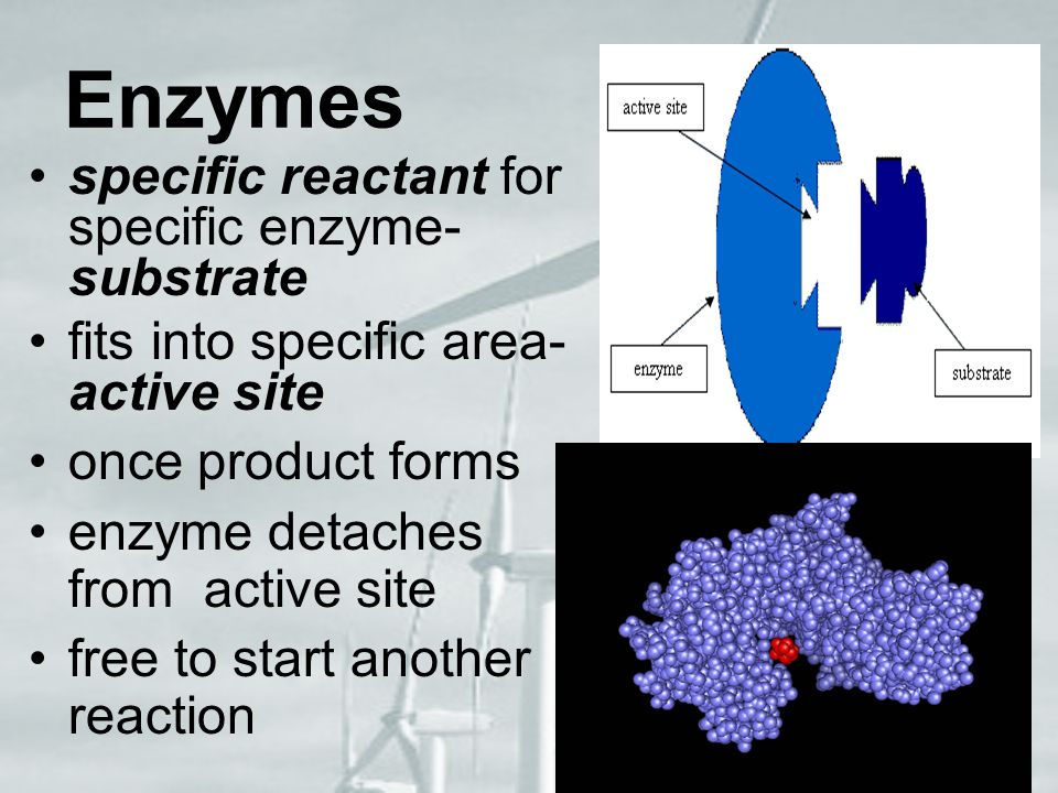 Enzymes specific reactant for specific enzyme-substrate