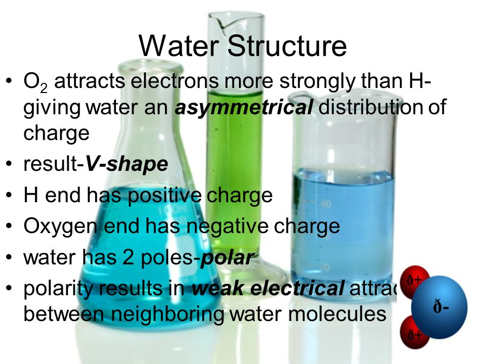 Water Structure O2 attracts electrons more strongly than H-giving water an asymmetrical distribution of charge.