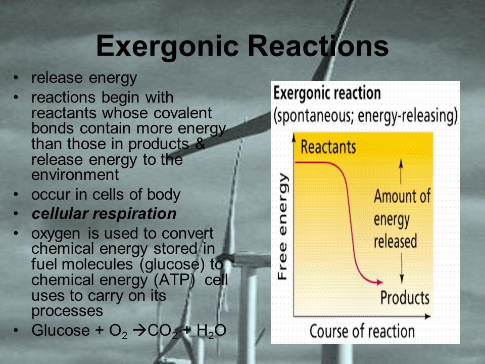 Exergonic Reactions release energy