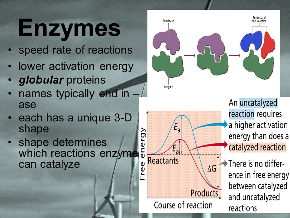 Enzymes speed rate of reactions lower activation energy