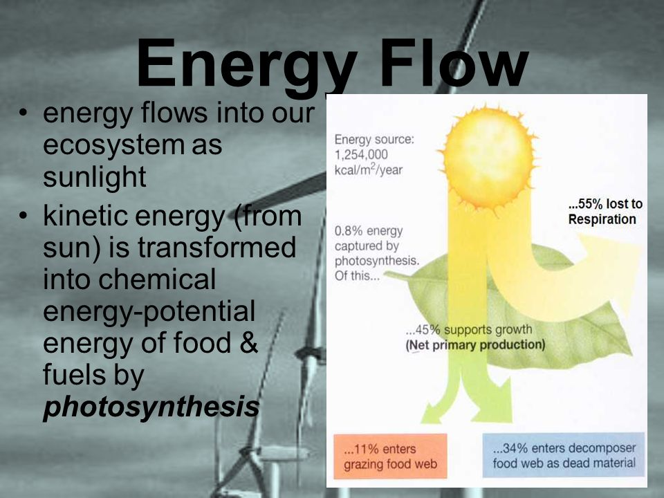 Energy Flow energy flows into our ecosystem as sunlight