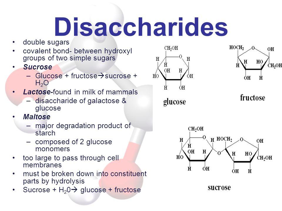 Disaccharides double sugars