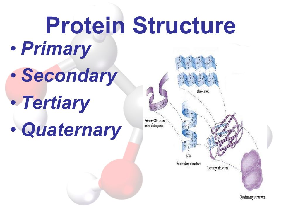 Protein Structure Primary Secondary Tertiary Quaternary