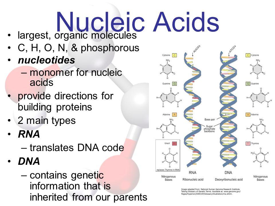 Nucleic Acids largest, organic molecules C, H, O, N, & phosphorous