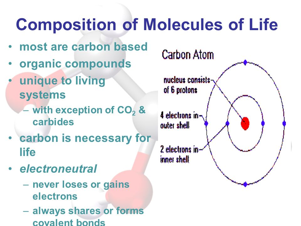 Composition of Molecules of Life