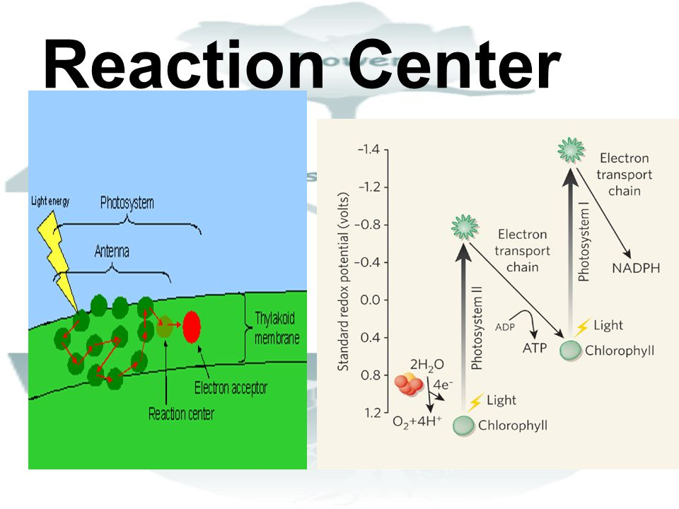 Reaction Center
