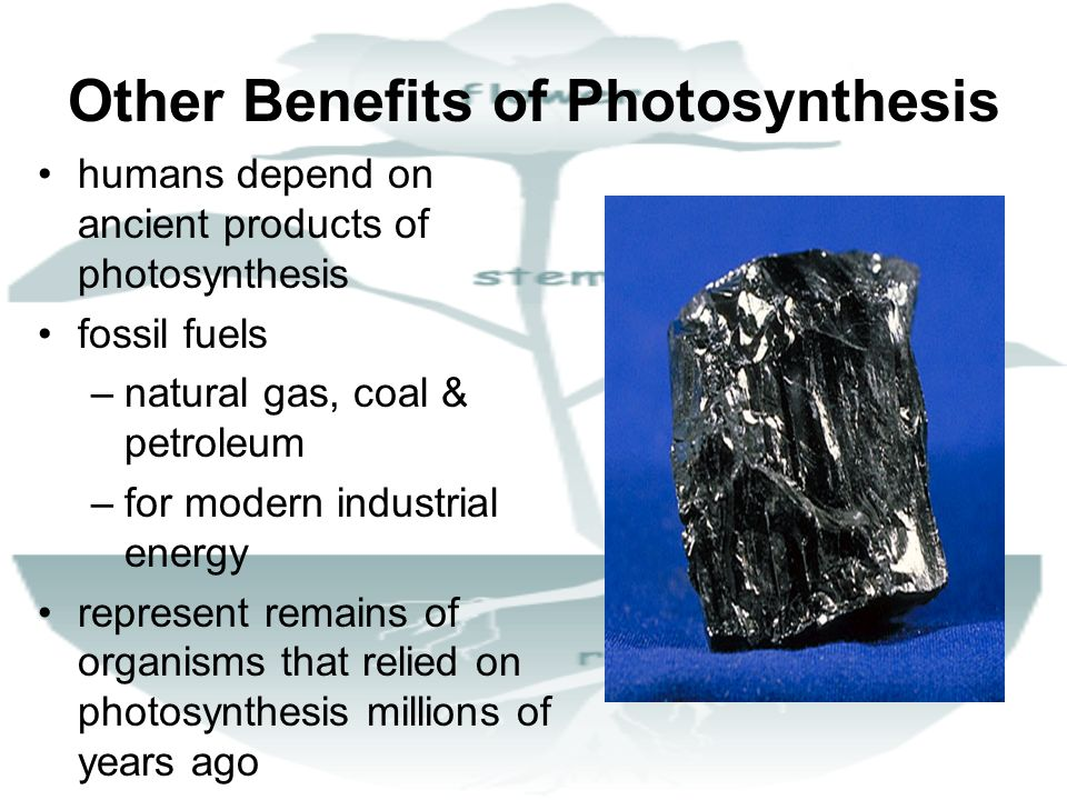 Other Benefits of Photosynthesis