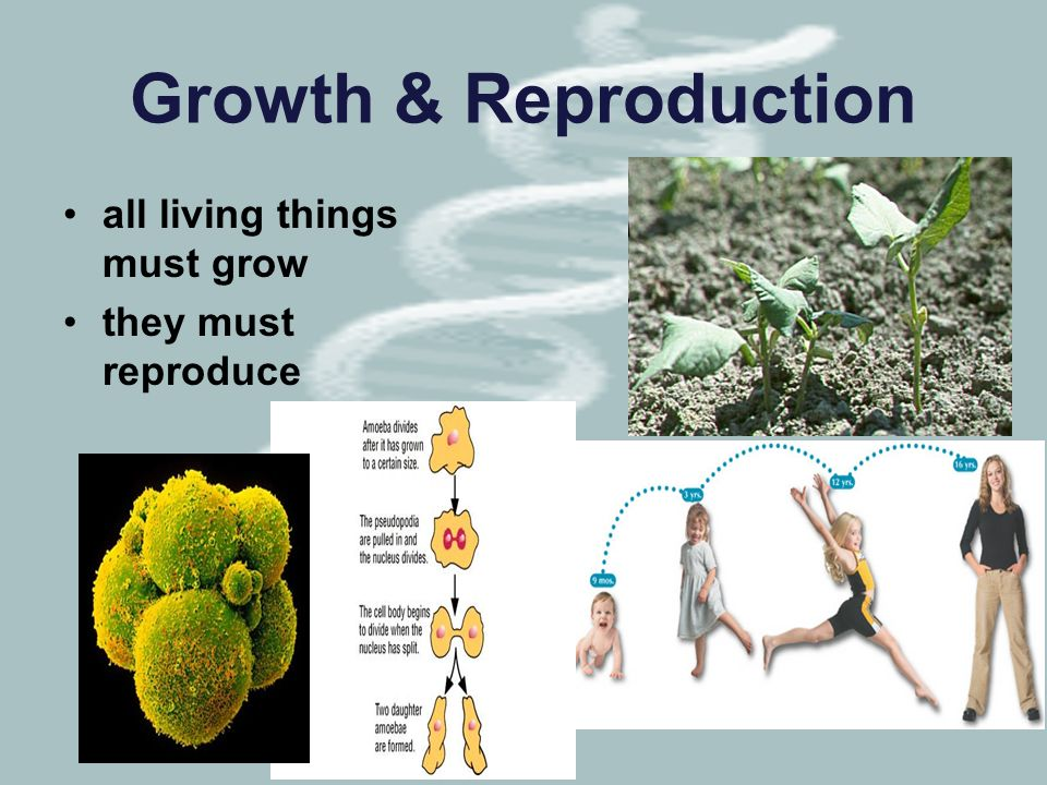 Growth & Reproduction all living things must grow they must reproduce