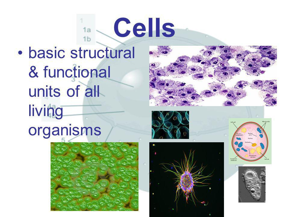 Cells basic structural & functional units of all living organisms