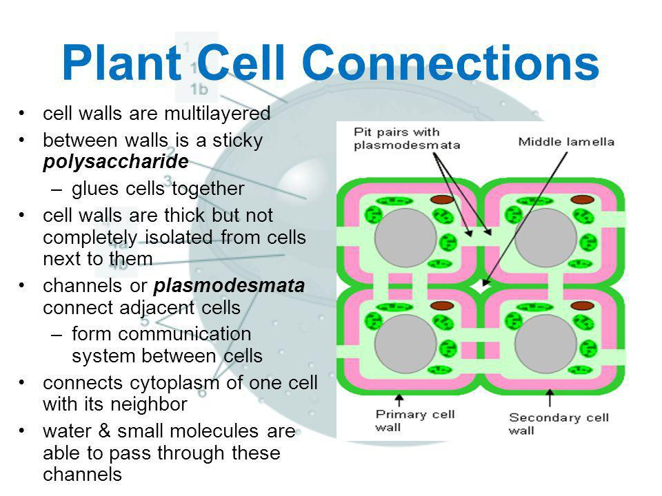 Plant Cell Connections