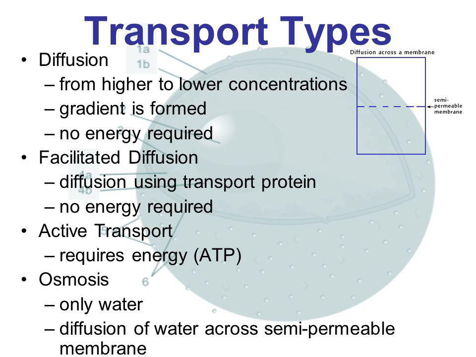 Transport Types Diffusion from higher to lower concentrations