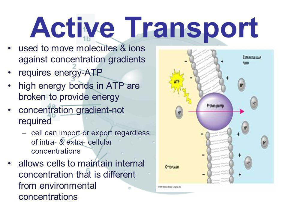 Active Transport used to move molecules & ions against concentration gradients. requires energy-ATP.