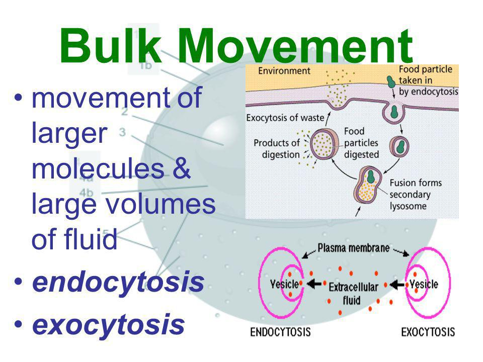 Bulk Movement movement of larger molecules & large volumes of fluid