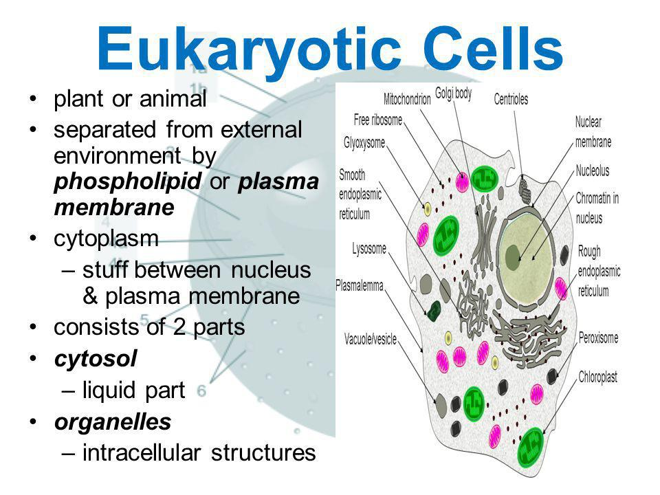 Eukaryotic Cells plant or animal