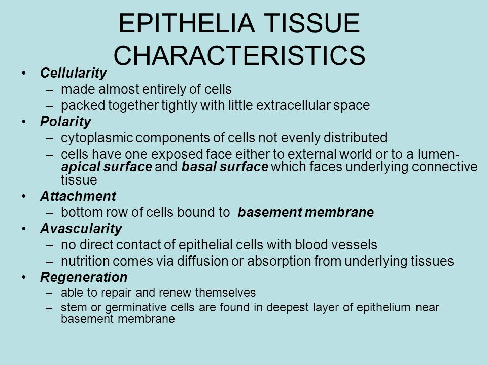 EPITHELIA TISSUE CHARACTERISTICS