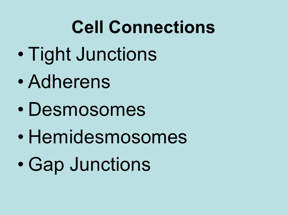 Tight Junctions Adherens Desmosomes Hemidesmosomes Gap Junctions