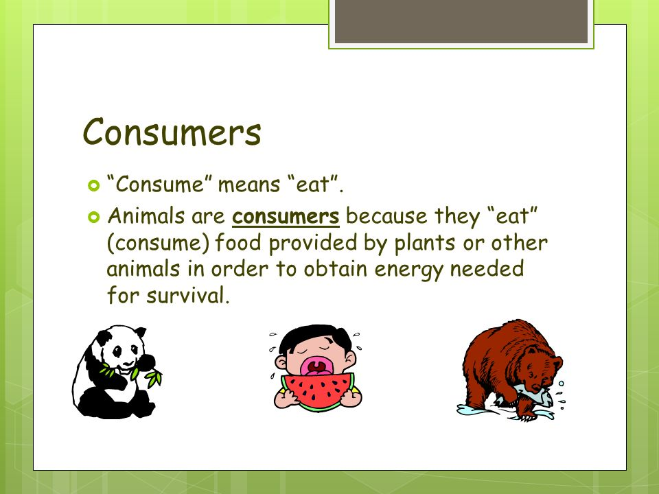How Do Consumers Obtain Energy From The Food They Eat