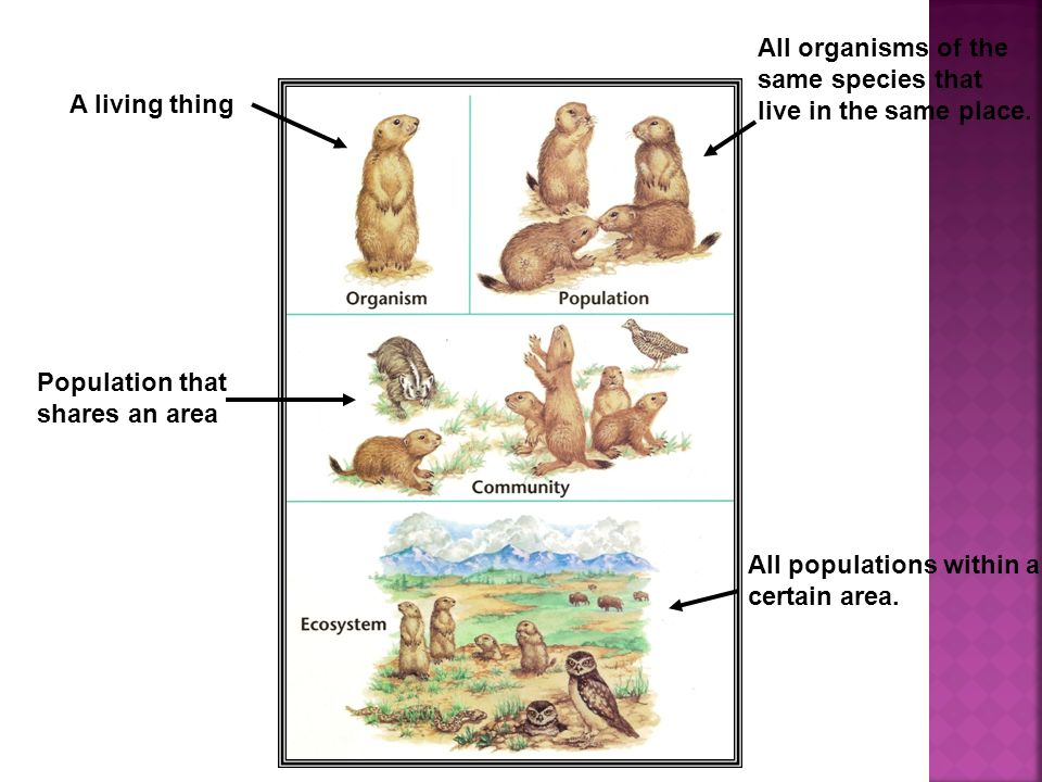 All organisms of the same species that. live in the same place. A living thing. Population that.