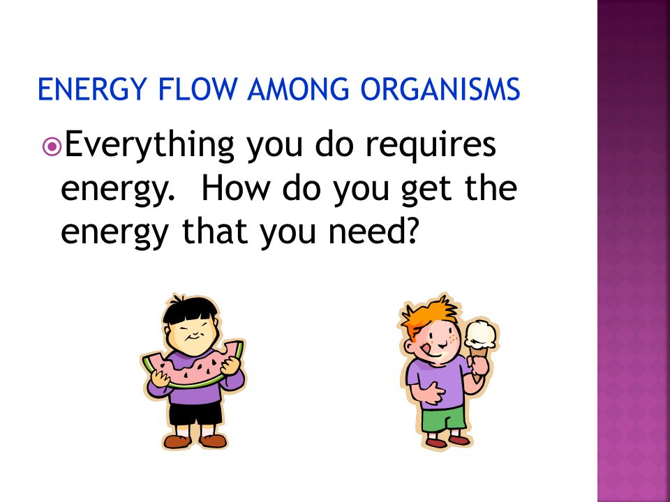 ENERGY FLOW AMONG ORGANISMS