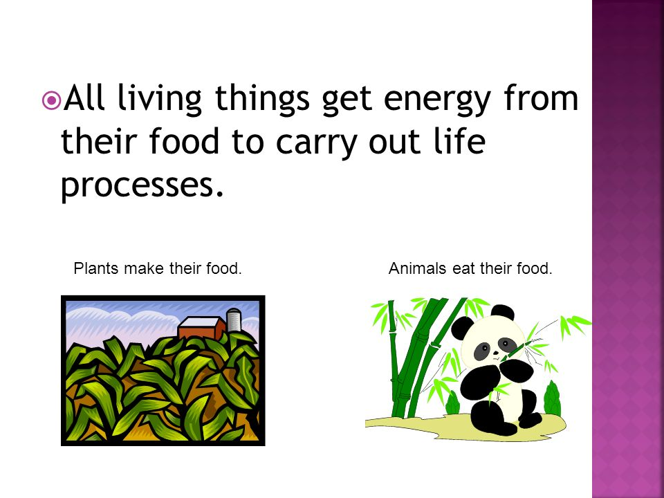 All living things get energy from their food to carry out life processes.