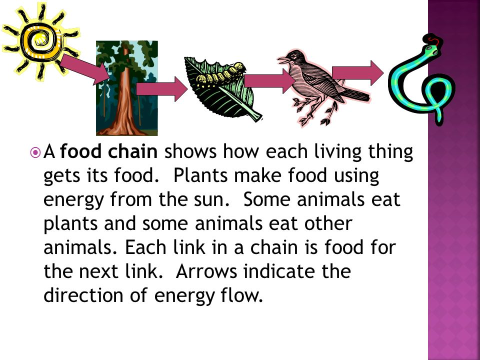 A food chain shows how each living thing gets its food