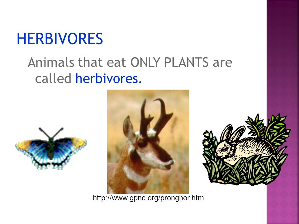 HERBIVORES Animals that eat ONLY PLANTS are called herbivores.