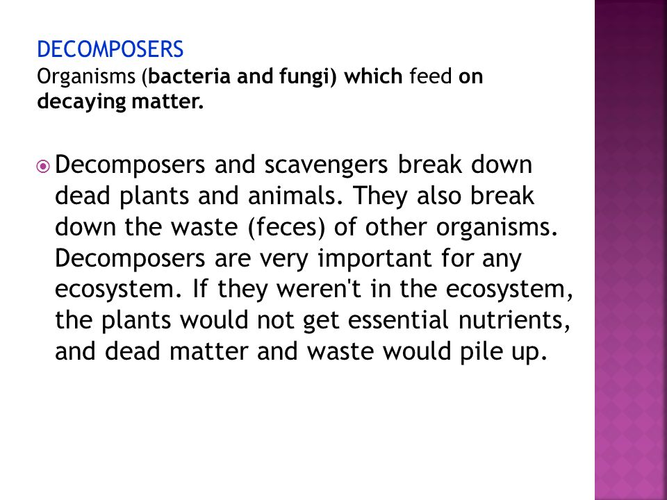 DECOMPOSERS Organisms (bacteria and fungi) which feed on decaying matter.