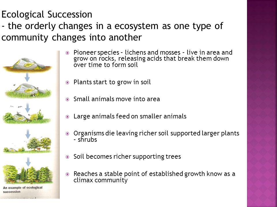 Ecological Succession - the orderly changes in a ecosystem as one type of community changes into another