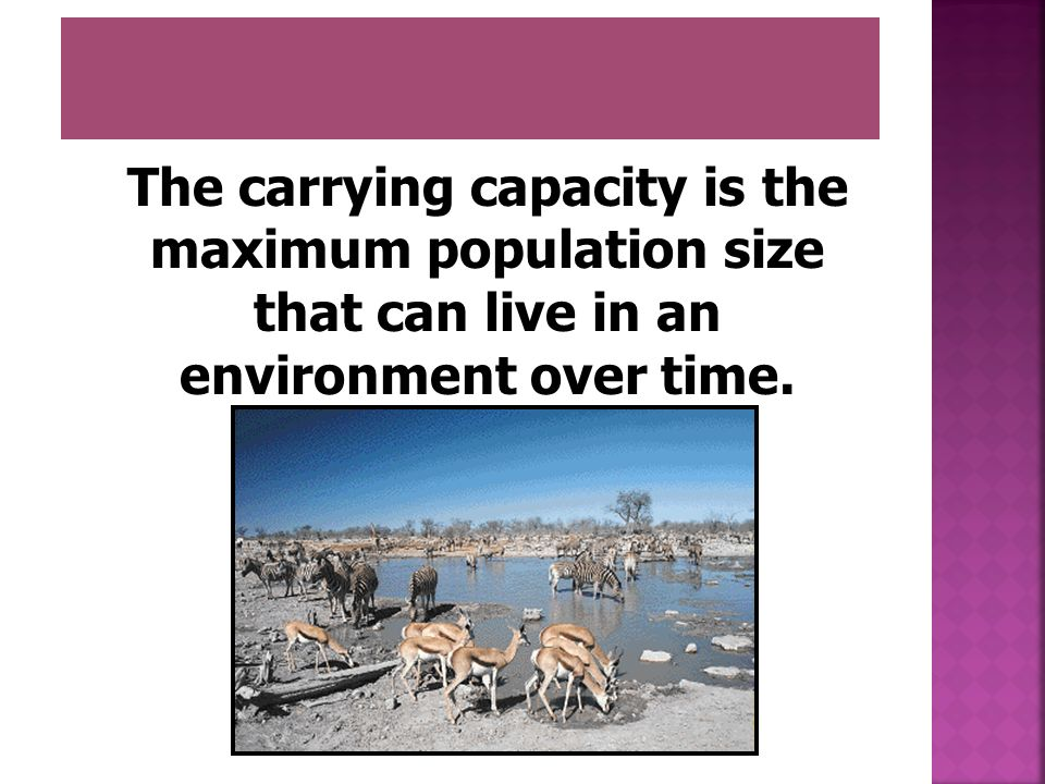 The carrying capacity is the maximum population size that can live in an environment over time.