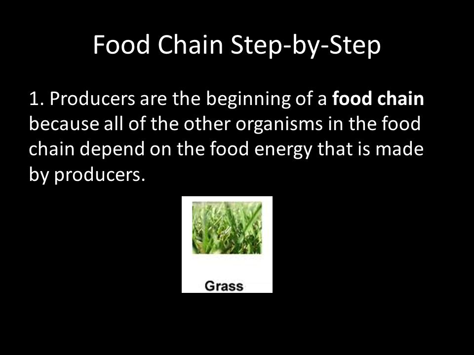 The Organisms At The Beginning Of A Food Chain Are