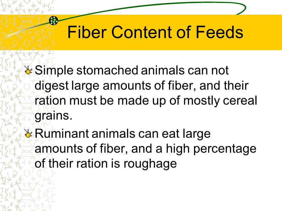 Fiber Content of Feeds Simple stomached animals can not digest large amounts of fiber, and their ration must be made up of mostly cereal grains.
