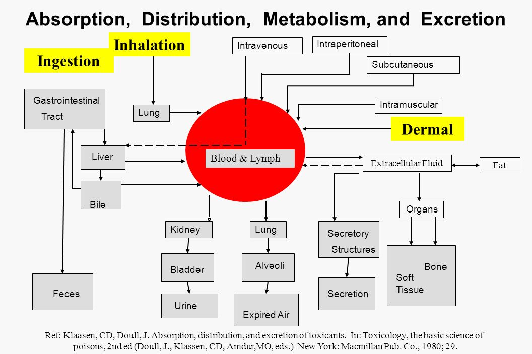 Absorption, Distribution, Metabolism, and Excretion