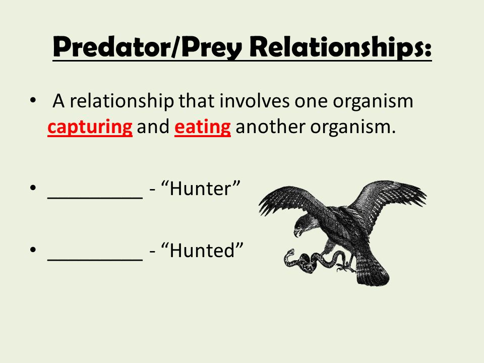 predator prey relationship biology