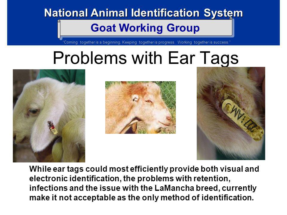 Problems with Ear Tags
