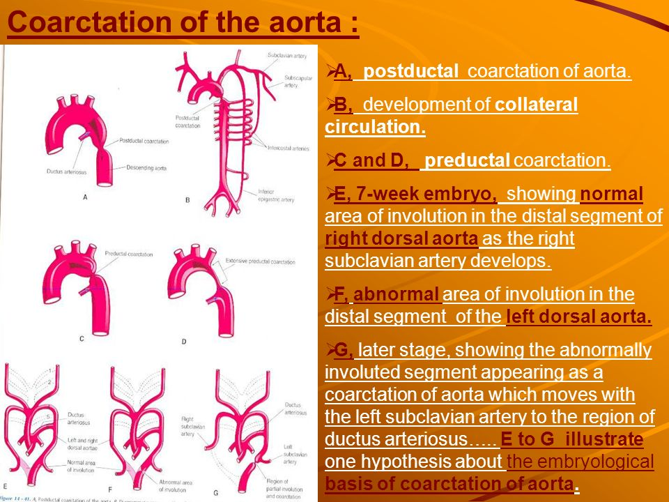 development of the heart ppt download
